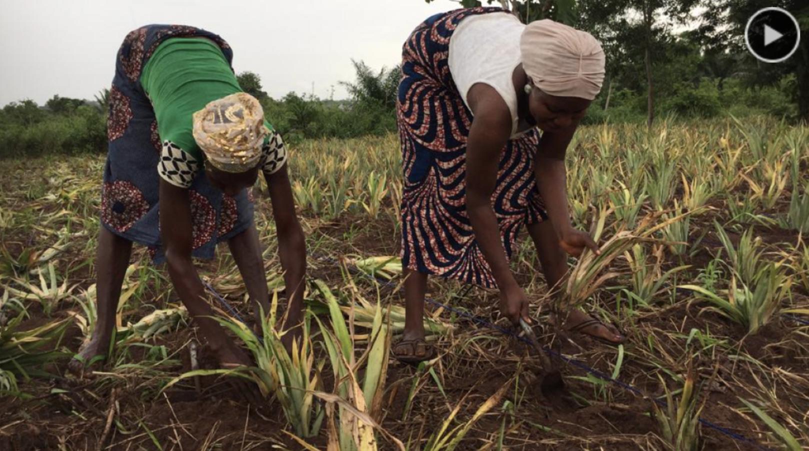 AgriNet : les rudiments de l'agriculture en langue Fon
